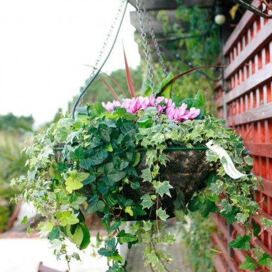 Flowers For Hanging Baskets In Winter : How to make a winter hanging basket rated people