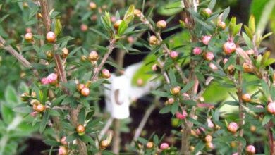 Photo of Gardeners offer landscaping skills online