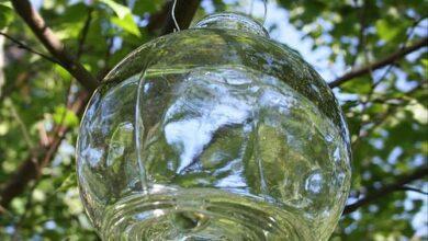 Photo of Garden Wasp Deterrent Ideas