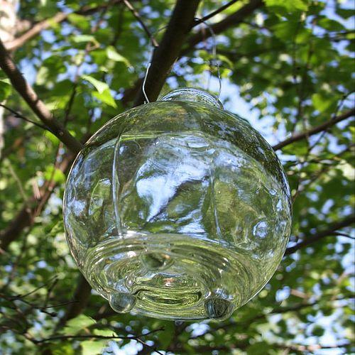 Garden Wasp Deterrent Ideas Rated People Blog