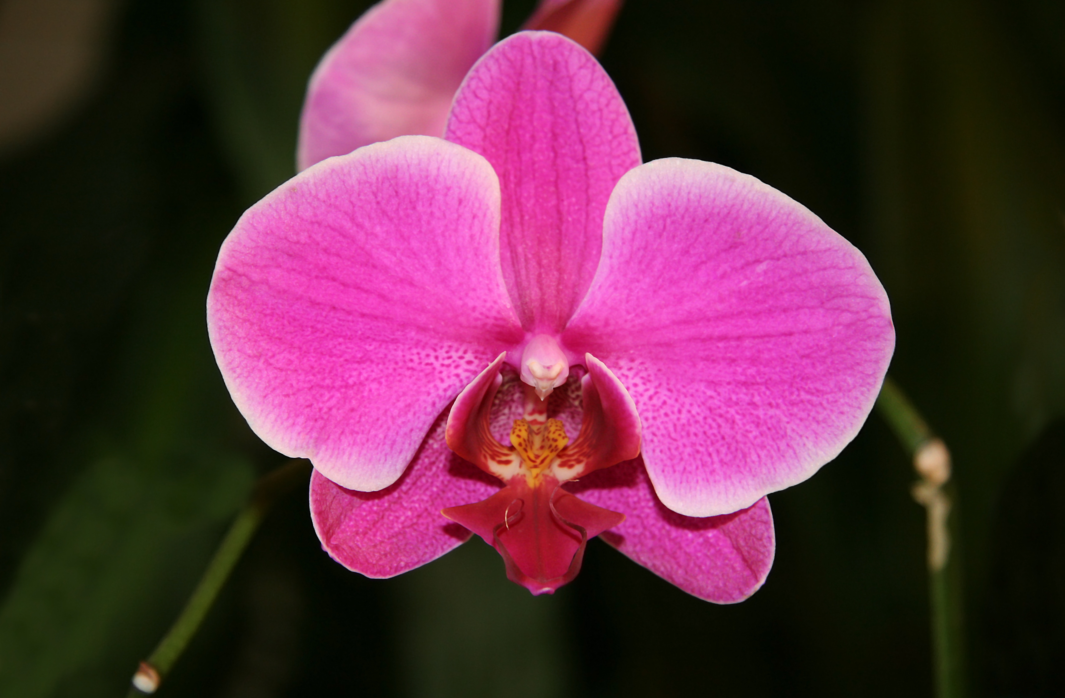 Photo of Orchid named Britain's favourite houseplant