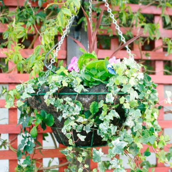 Hanging Flower Baskets For Winter : How to make a winter hanging basket rated people