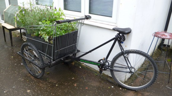 bicycle with green plants