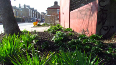 Photo of Help yourself to the community garden – The Edible Bus Stop