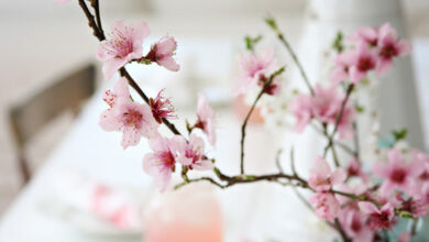 Photo of Spring is in the air – are you ready for the home improvement season?