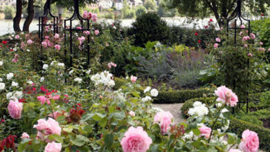 Photo of Opt for easy-to-maintain gardens, Britons told