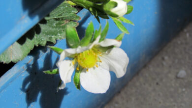 Photo of Alternative gardening shows on the go: Chelsea Fringe