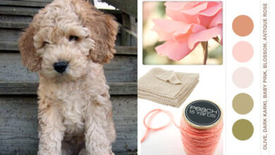 Photo of Match your décor to your dog