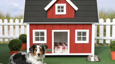 Photo of Cool Dog Houses and Architecture