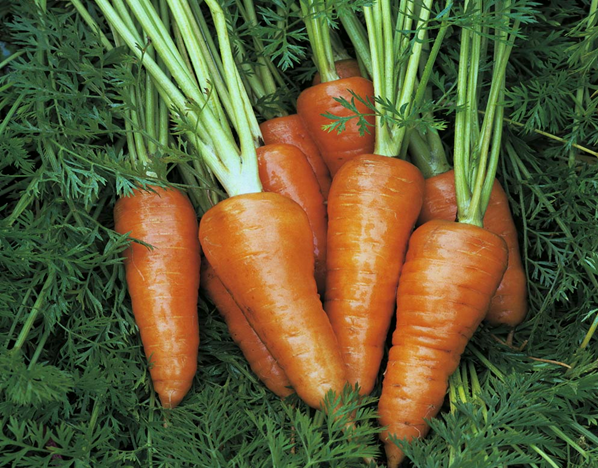 grow-your-own carrots