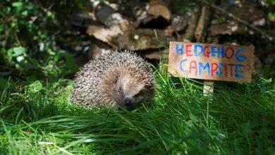 Photo of Creating a Wildlife Friendly Garden