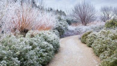Photo of Winter garden landscaping ideas