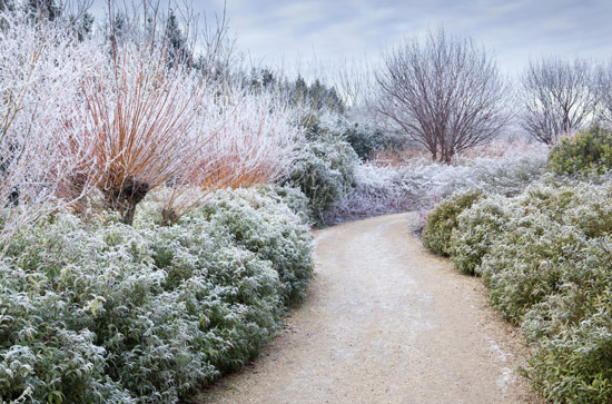 The Winter Walk At Anglesey Abbey, Cambridgeshire.