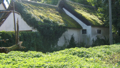 Photo of How to Remove Moss from Roof