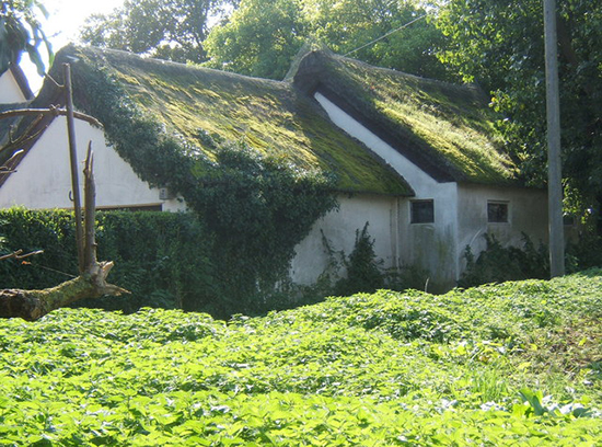 how to remove moss from roof