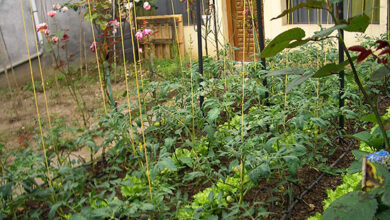 Photo of How to grow your own vegetable patch