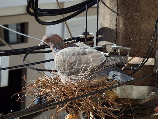 How To Deal With Nesting Birds Rated People Blog