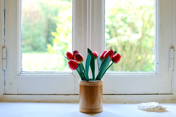 plant by the window
