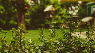 Photo of Things you can do in the garden in under an hour
