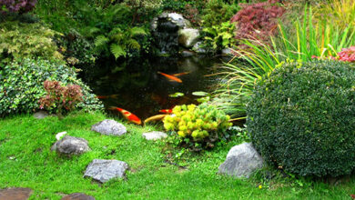 Photo of A guide to garden water features