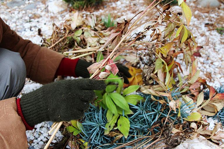 tidying the garden in winter
