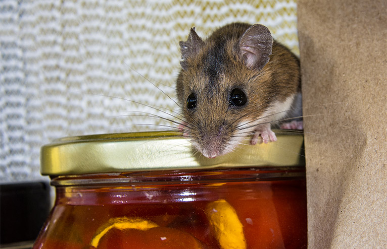 Brown mouse sitting on a jar