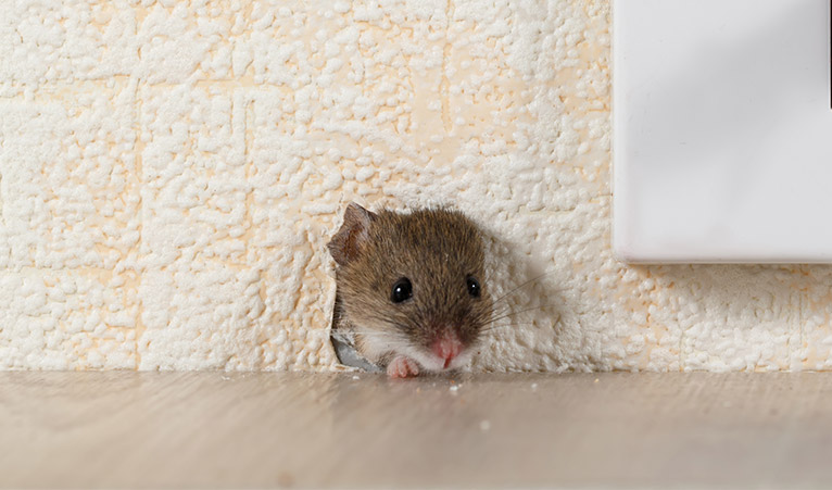 Mouse appearing through a hole in a wall