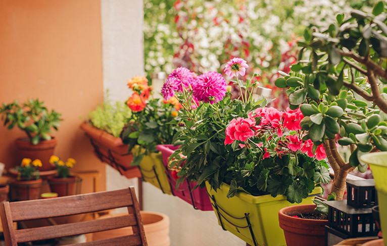 Balcony with colourful pot plants