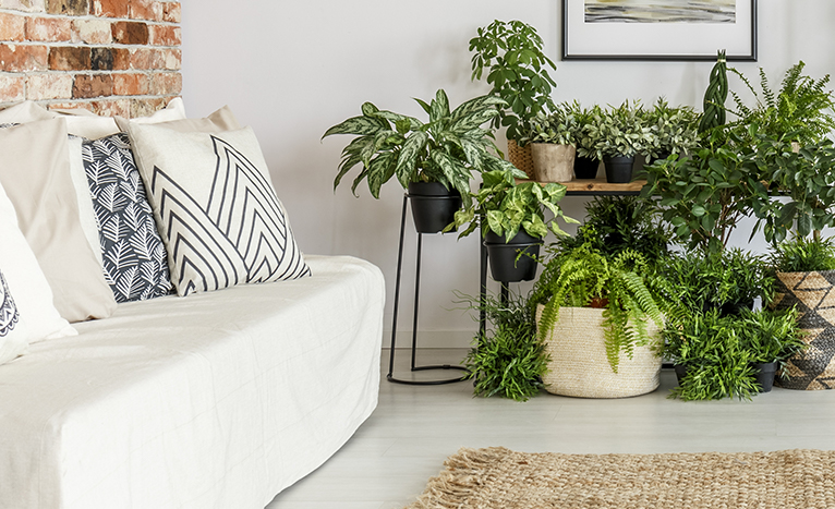 Arrangement of plants in minimal living room