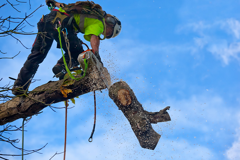Tree surgeon sawing off a branch
