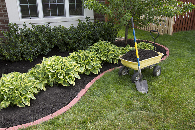 Bright and large green plants in garden with wheelbarrow and shovel nearby