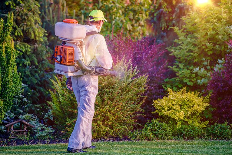 Gardener attending to bushes