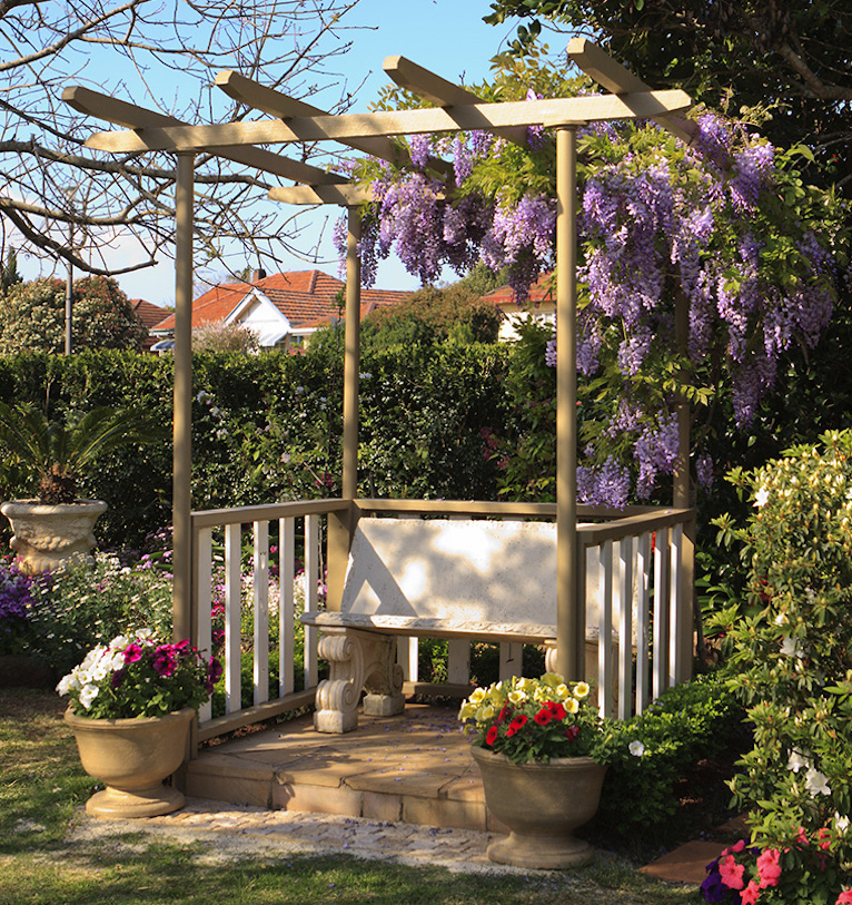 Wisteria growing on pergola