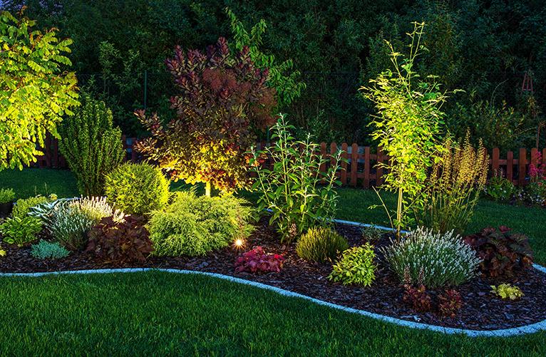 LED lighting in garden shrubbery at night