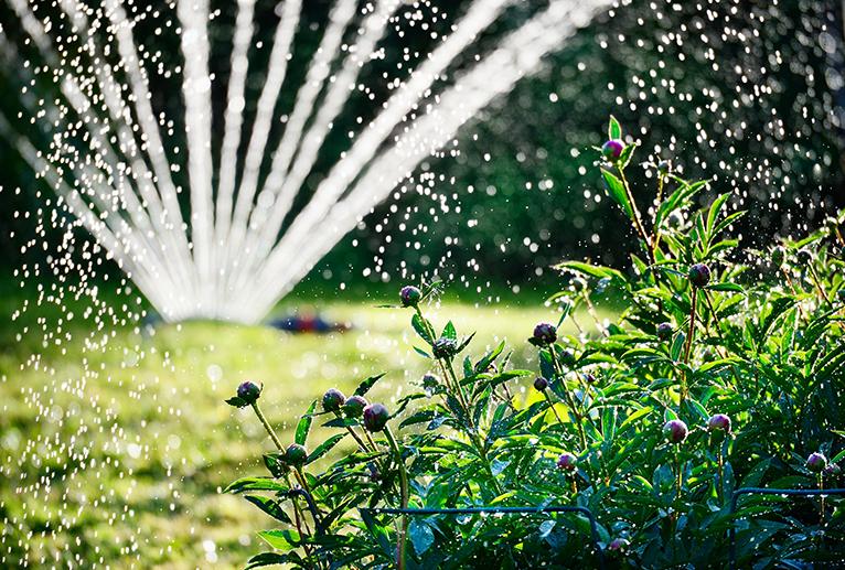 Sprinkler in garden