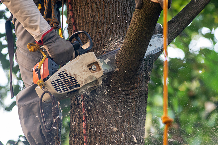 Tree surgeon using chainsaw to cut branch