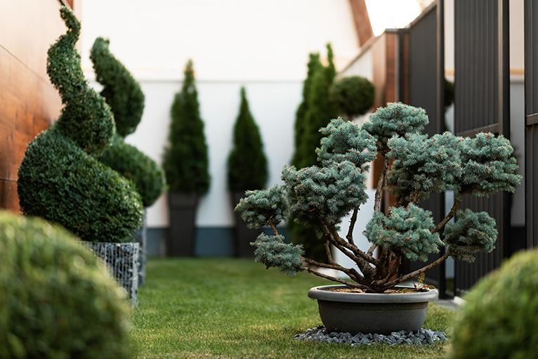 Bridgerton style garden: Potted topiary plants