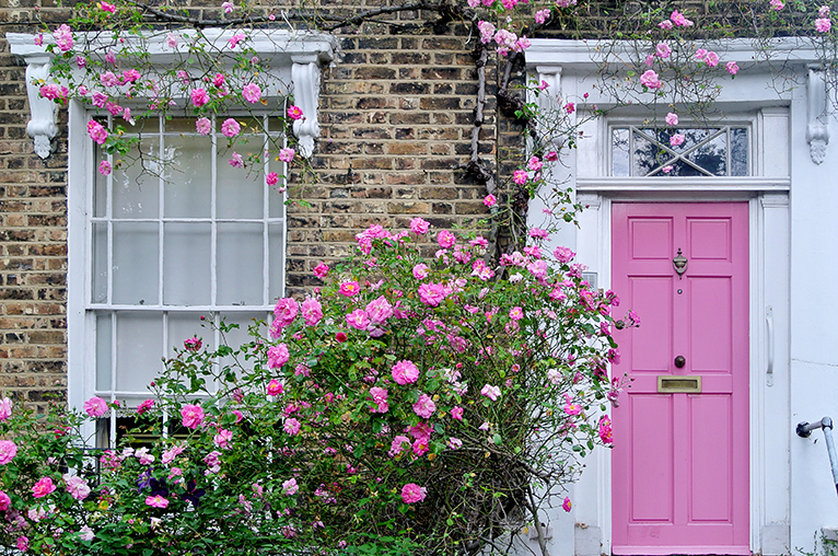 Pink rose bush next to pink front door