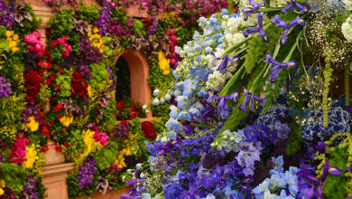 Beautiful multicoloured flower display inspired by Chelsea Flower Show.