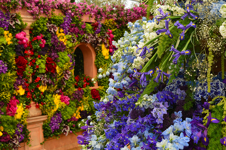 Beautiful display of multicoloured flowers from The Chelsea Flower Show.